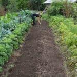 Créer un jardin potager bio avec l'aide d'Internet