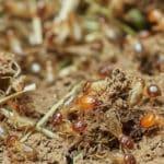 Les trucs à faire pour réussir un diagnostic de termites