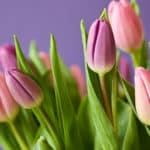 Les trucs à faire pour les tulipes, la magie des jardins
