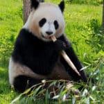 Les trucs à faire pour réussir son séjour au zoo