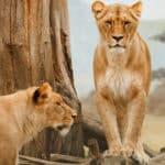 Les trucs à faire pour découvrir la vie des animaux sauvages