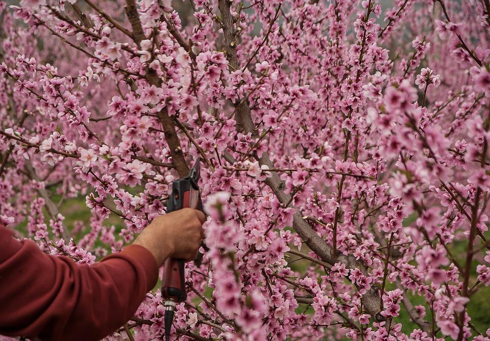 Les bienfaits de l'élagage d'arbre