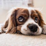Comment vivre avec son chien dans un appartement ?