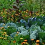 Les trucs à faire pour cultiver un potager en terrain argileux
