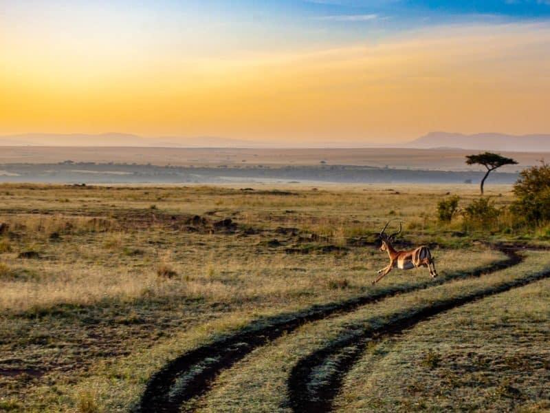 Antilope visa kenia