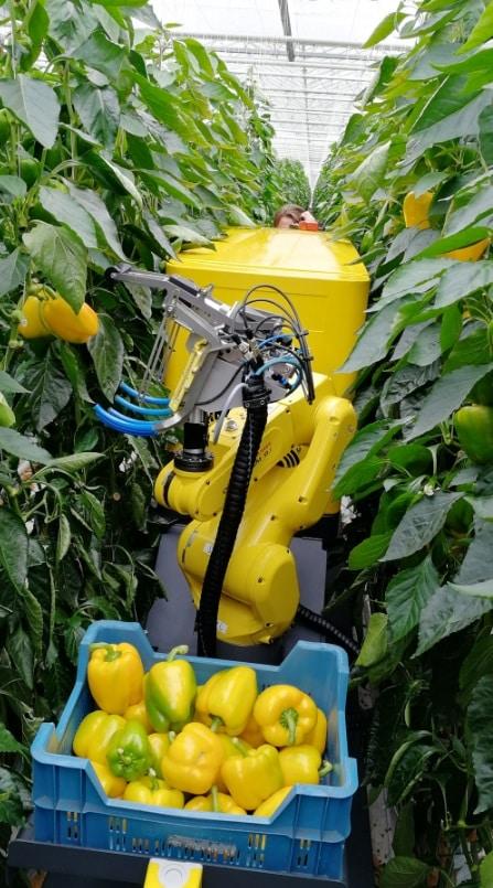 Un robot ceuillette