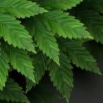 Le renouvellement de la marque verte, GB The Green Brand